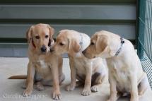 liwen-chien-guide-aveugle-43-15-09-07-27