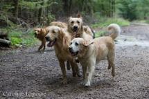 liwen-chien-guide-aveugle-52-3