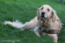 liwen-chien-guide-aveugle-52-5