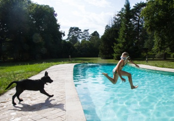 liwen-chien-guide-aveugle-accueil