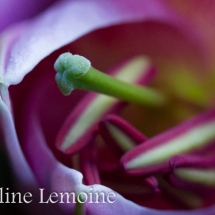photographie-fleurs-10