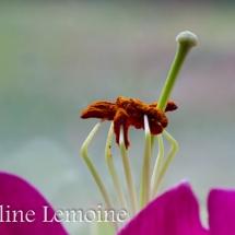 photographie-fleurs-9