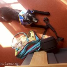 liwen-chien-guide-aveugle-11