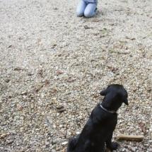 liwen-chien-guide-aveugle-15
