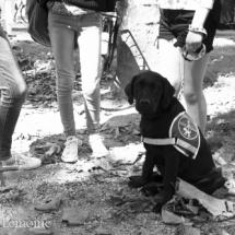 liwen-chien-guide-aveugle-27