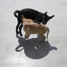 liwen-chien-guide-aveugle-30