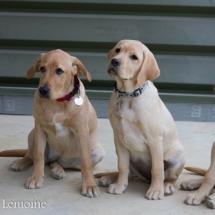 liwen-chien-guide-aveugle-41-15-09-07-25