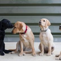 liwen-chien-guide-aveugle-45-15-09-07-29