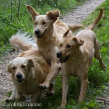 liwen-chien-guide-aveugle-52-2
