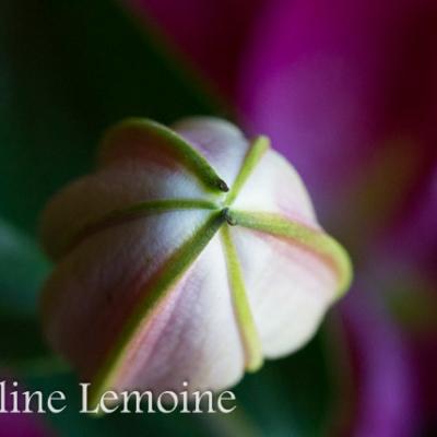photographie-fleurs-0