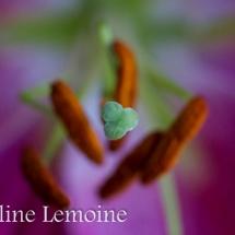 photographie-fleurs-2