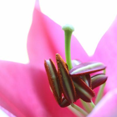 photographie-fleurs-6