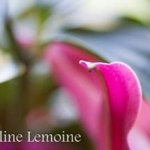 photographie-fleurs-8